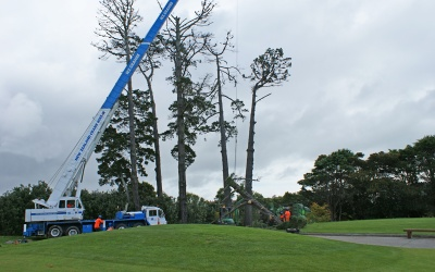 Remuera Golf Club Pine Removal