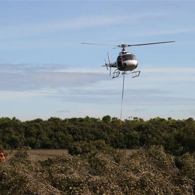 mangrove helicopter removal