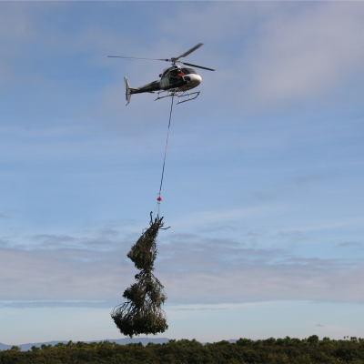 mangrove removal with a helicopter