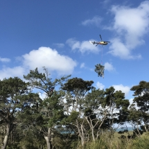 helicopter arborist services