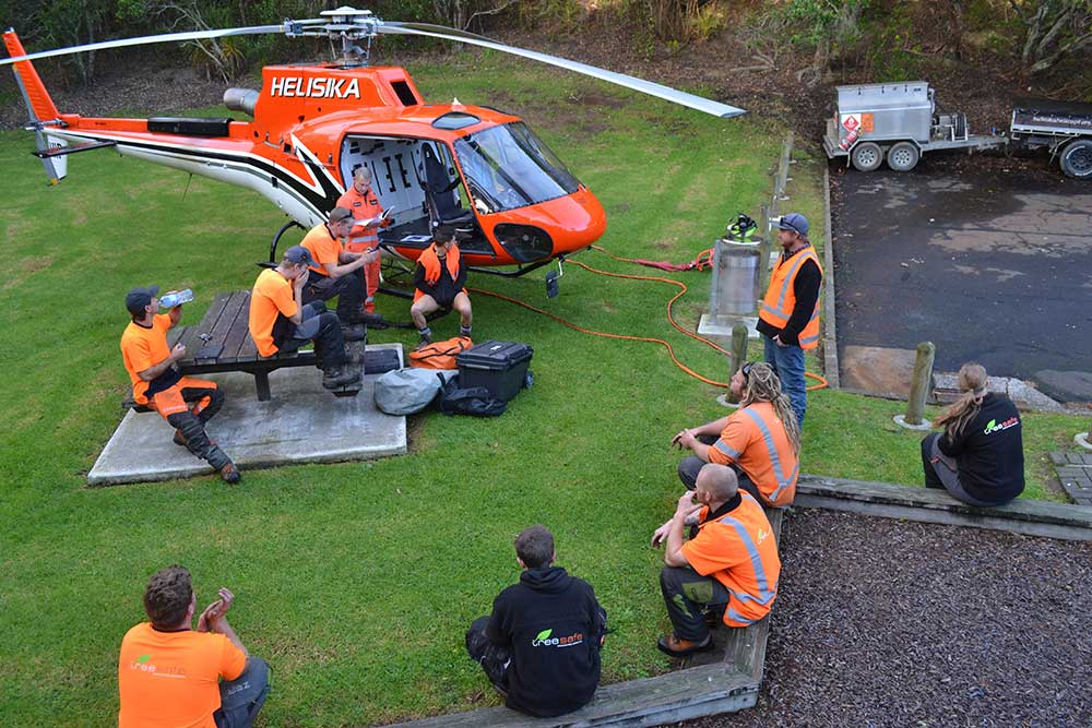 Auckland Council – Helicopter Pine Removal
