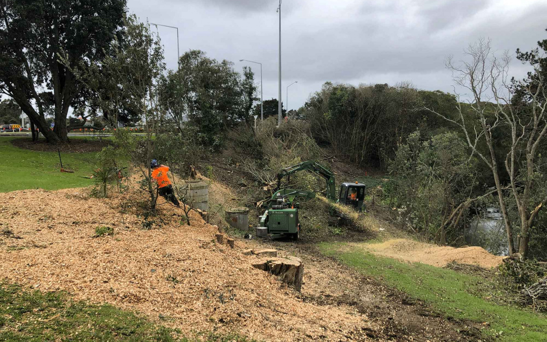 Wildlands – Pest Trees Removal
